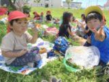 6月25日(金) ピクニック